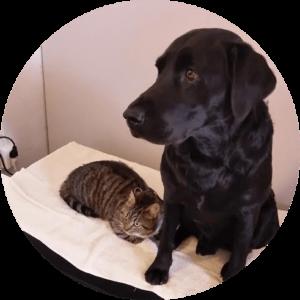 Hund och kat